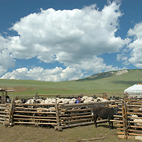 """MONGOLIA.  Sheep & goats in corral beside felt-lined """"ger"""" (yurt) in valley north of Muren in Hovsgol district."""