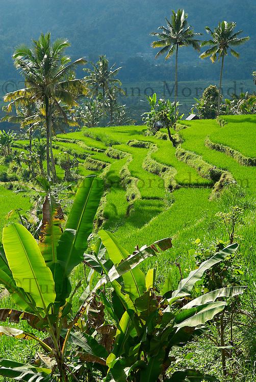 Indonesie, Bali, Rizieres dans le centre vers Sidemen // Indonesia, Bali, Rice field around Sidemen., Centre island