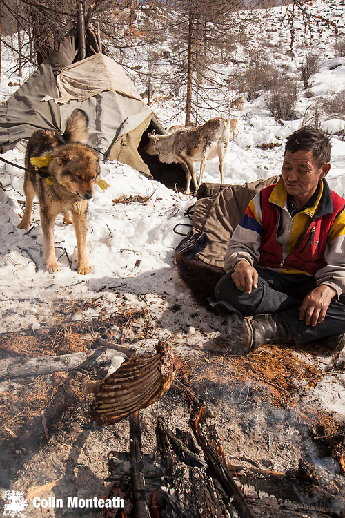 Tsaatan cooks ribs over fire while dog looks on hungrily and reindeer pokes head inside teepee, Hunkher mountains, northern Mongolia