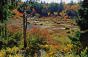 PA landscapes, autumn, Promised Land State Park