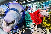 Latitude Coloured Sheep Sadlers Wells