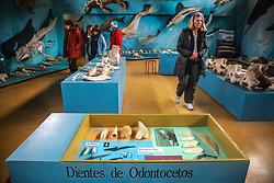 Museo Acatushún é um museu de aves e mamíferos do extremo sul inaugurado em 10 de março de 2001e está localizado na Estância Harberton na beira do Canal de Beagle. FOTO: Jefferson Bernardes/ Agência Preview