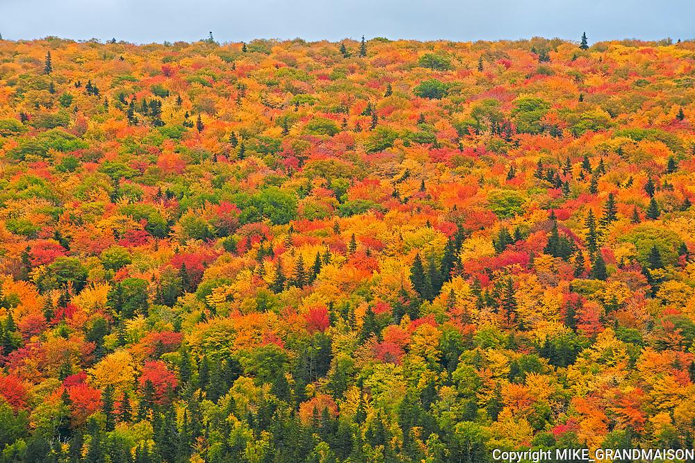 Acadian forest in autumn foliage<br />Cape Breton Highlands National Park<br />Nova Scotia<br />Canada