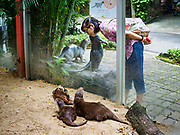 17 AUGUST 2018 - BANGKOK, THAILAND:   A woman looks at the otter display in Dusit Zoo in Bangkok. The zoo opened in 1938. The zoo grounds were originally the Dusit Royal Garden. The zoo is scheduled to close by the end of August 2018 because it is being relocated to Nakhon Pathom province, south of Bangkok.      PHOTO BY JACK KURTZ