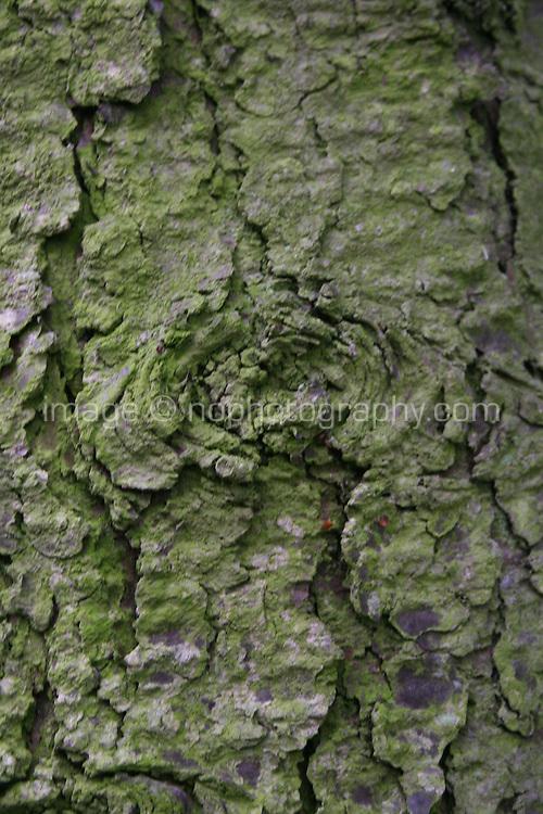 Slightly blurred detail of tree bark