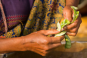 """01 MARCH 2014 - MAE SOT, TAK, THAILAND:  The hands of a Burmese woman shelling beans in her community in the forest just north of Mae Sot. Mae Sot, on the Thai-Myanmer (Burma) border, has a very large population of Burmese migrants. Some are refugees who left Myanmar to escape civil unrest and political persecution, others are """"economic refugees"""" who came to Thailand looking for work and better opportunities.   PHOTO BY JACK KURTZ"""