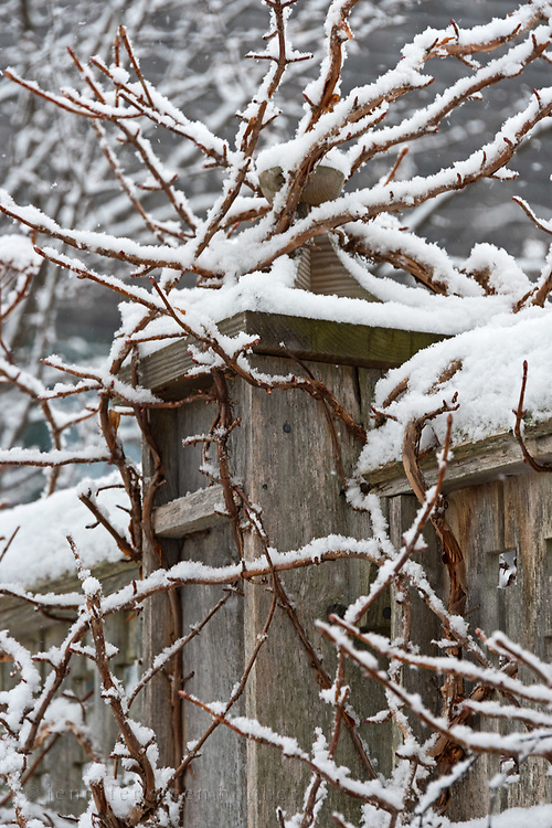 Snow outlining vines climbing a fence at the Asticou Azalea Garden, Northeast Harbor, Maine