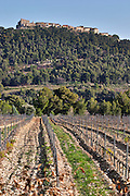 View over the vineyard in spring, vines in Cordon Royat training, the Le Castelet village on a hill top in the background. Mourvedre Domaine de la Tour du Bon Le Castellet Bandol Var Cote d'Azur France