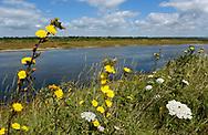 Coastal Lagoon - Pennington, Hampshire