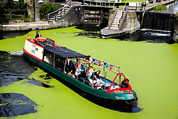 © Licensed to London News Pictures. 03/08/2019. London, UK. A boat passes on Regents Canal which is covered in green Algae. Recent high temperatures in London has caused an increase of the Algae in rivers and canals. Photo credit: Dinendra Haria/LNP