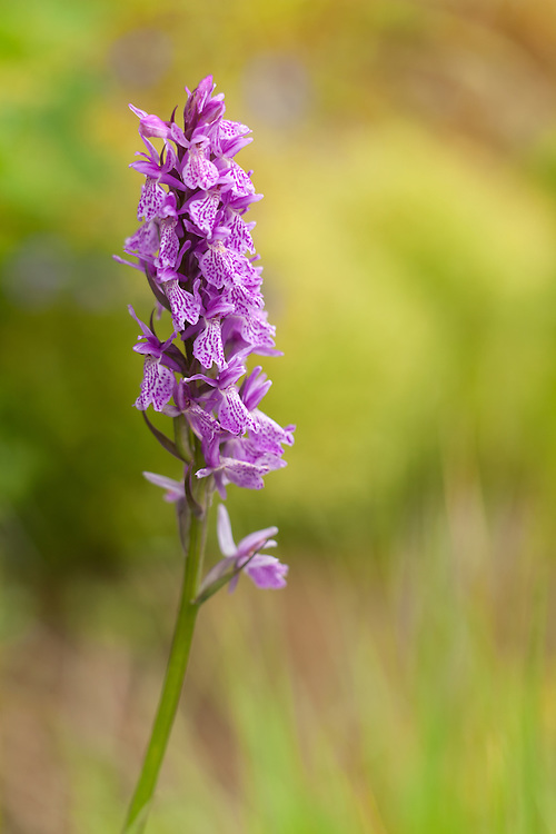 Orchid in bloom standing in grass against colourful background