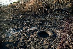 July 30, 2017 - Naples, Italy - National Park of Vesuvius after vast Fire July on 31,2017, Naples,Italy  (Credit Image: © Paolo Manzo/NurPhoto via ZUMA Press)