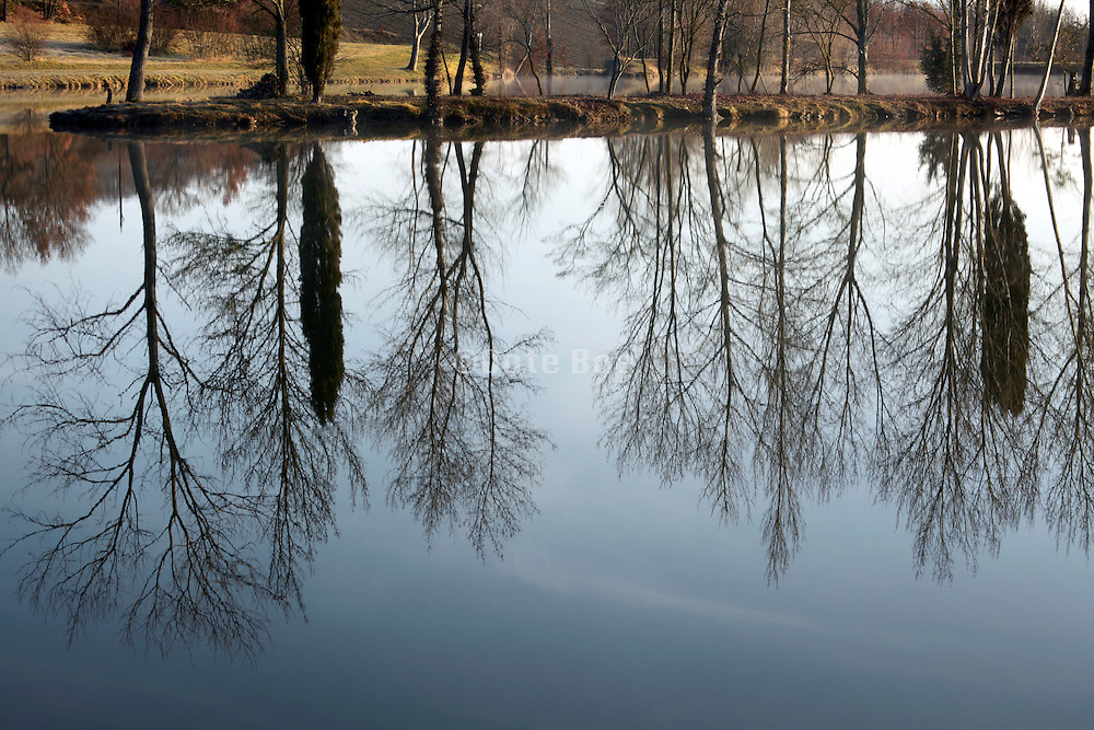 trees reflecting in the calm water of a lake