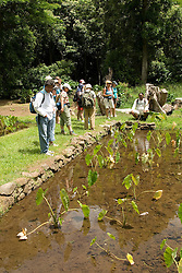 Hawaii: Molokai, Halawa Valley, taro fields, with hike in past taro fields, ancient walls, to waterfalls, guided by Lawrence Aki..Photo himolo224-72020..Photo copyright Lee Foster, www.fostertravel.com, lee@fostertravel.com, 510-549-2202