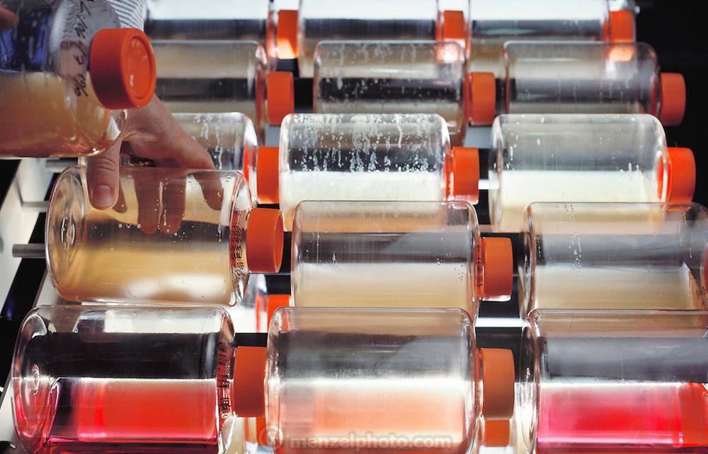 (1992) Cell line cultures growing in warm room at the Howard Hughes Medical Institute in Salt Lake City, Utah. DNA Fingerprinting.