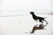 A dog launches itself towards the waves on the beach in Seminyak, Bali.