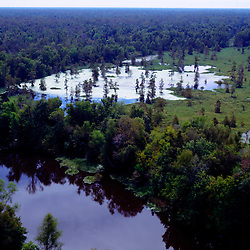 AERIAL VIEW OF Swamp Land & Cypress Trees