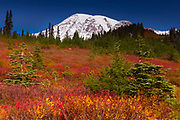 Fall color fills a meadow beneath Mount Rainier at Paradise in Mount Rainier National Park, Washington. Mount Rainier, with an elevation of 14,411 feet (4,392 meters), is the tallest mountain in Washington and the highest mountain in the Cascade Range.