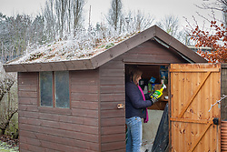 Tidying chemicals and sprays a shed in winter