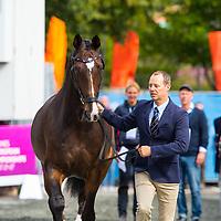 Horse Inspection - Dressage - Team GBR - FEI European Championships 2017 - Gothenburg