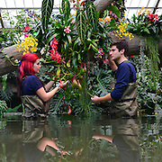 © Licensed to London News Pictures. 06/02/2014. Kew, UK. Horticulturists Ellie (Left) and Alex arrange the displays. Orchids, the first festival on Kew's 2014 events calendar showcases thousands of exotic and rare orchids. The tropical display can be viewed at The Princess of Wales Conservatory, where it's always hotter than 21°C, Kew Gardens, Saturday 8 February to Sunday 9 March 2014. Photo credit : Stephen Simpson/LNP