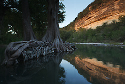 Stock photo of a large cypress tree with roots in the river in the Texas Hill Country