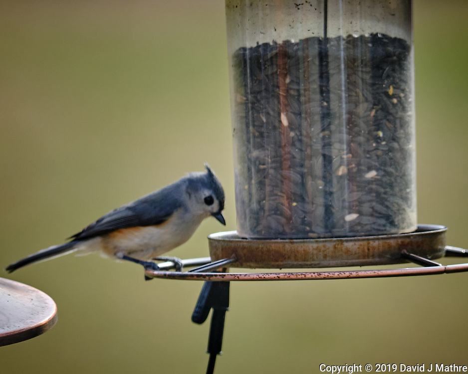 Tufted Titmouse at a bird feeder Image taken with a Fuji X-T3 camera and 200 mm f/2 lens and 1.4x teleconverter (ISO 320, 280 mm, f/4.5, 1/500 sec).