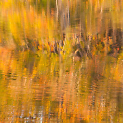 Reflections of fall leaves in the Ipswich River, North Reading, MA.