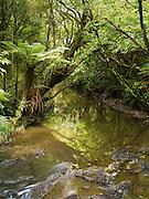 Purukaunui River, just upstream from Purukaunui Falls; The Catlins, South Island, New Zealand
