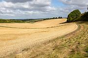 Rolling fields of stubble chalk arable field slope of Inkpen Hill, Berkshire, England, UK