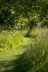 Mown grass path through the meadow grass in the orchard at Sissinghurst Castle Garden