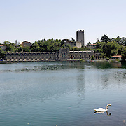 Un cigno sull'Adda nei pressi della centrale Enel Taccani a Trezzo d'Adda...A white swan on the Adda river near the hydroelectric power plant Taccani in Trezzo d'Adda.