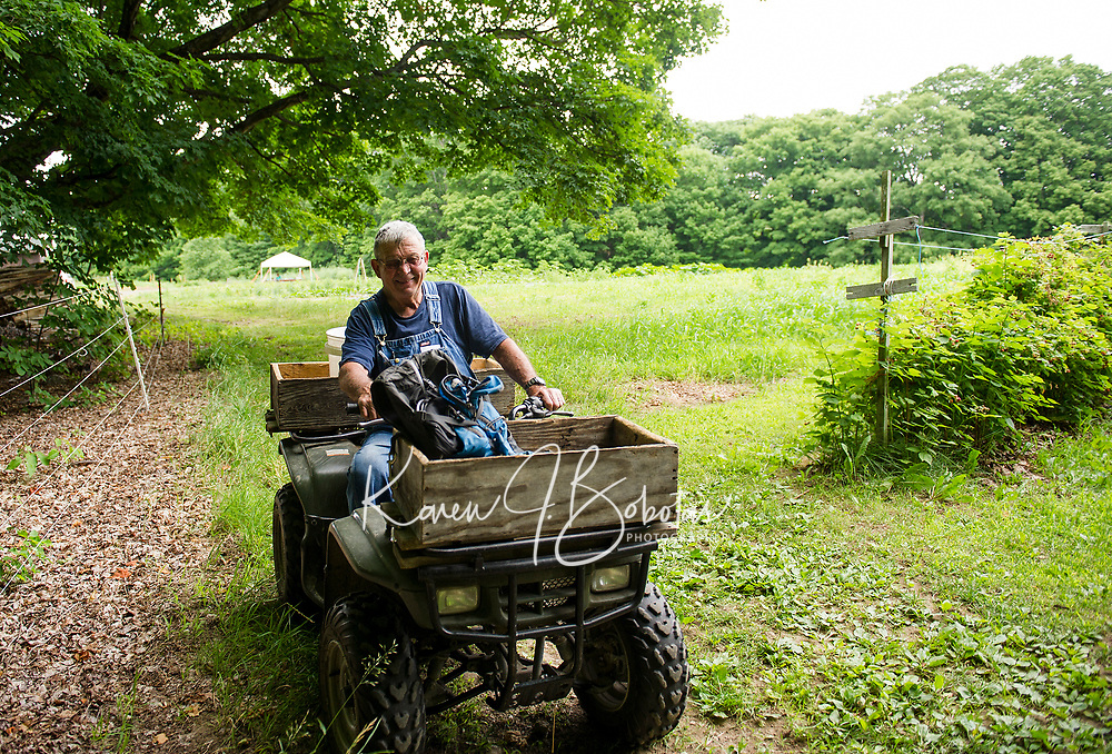 Nathan Smith of Smith Farm Stand in Gilford in his raspberry field Thursday morning.  (Karen Bobotas/for the Laconia Daily Sun)