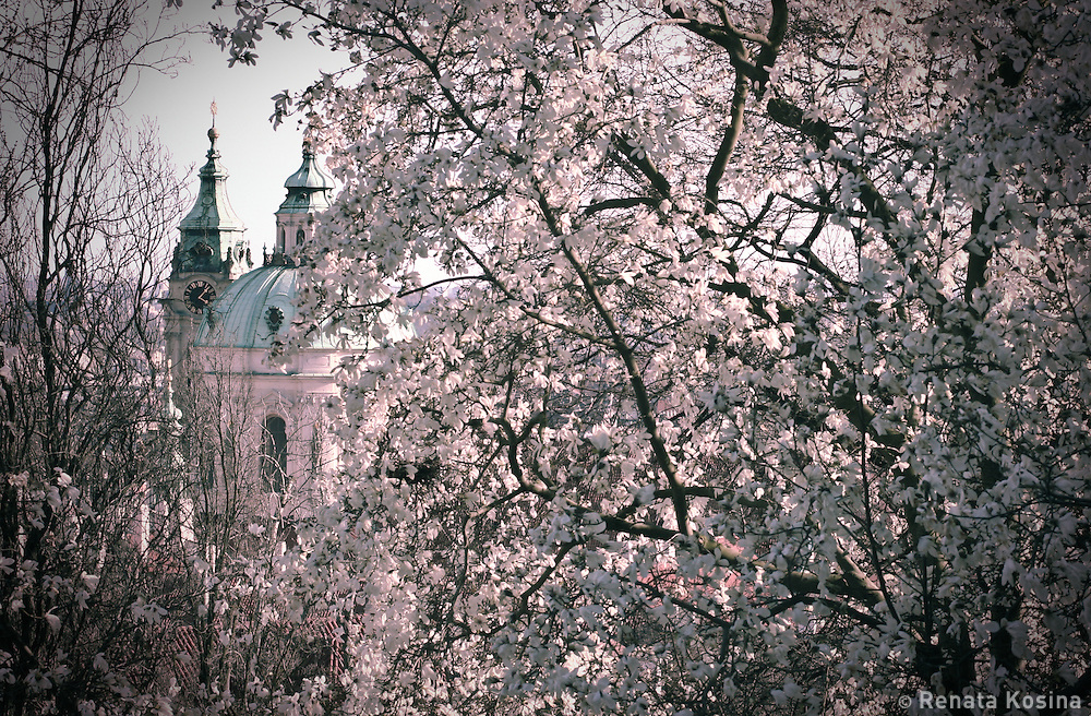 A spring view of the St. Nicholas Cathedral in Prague, Czech Republic