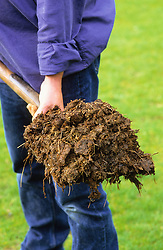 A spade load of well rotted manure