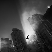 Vancouver - January 24, 2016 - A seagull flies through the fog on a misty morning in Vancouver, British Columbia. <br /> Photo: © Rod Mountain<br /> <br /> http://bit.ly/2aiGU35<br /> @rod_mountain<br /> https://twitter.com/rod_mountain<br /> <br /> http://bit.ly/RM-Archives