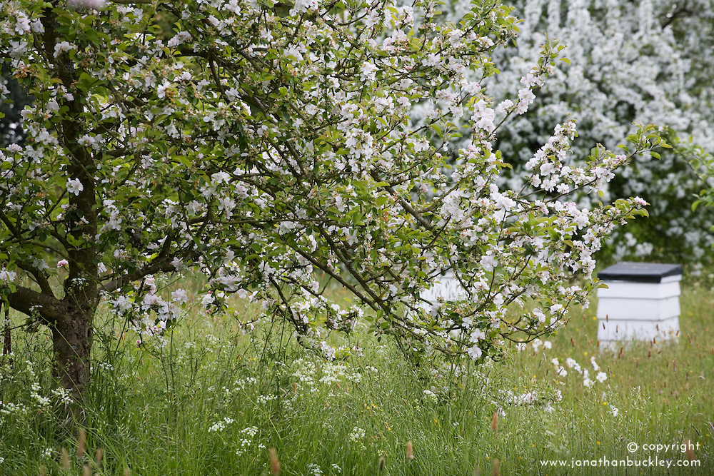 Spring blossom and beehives in the Orchard Meadow at Sissinghurst Castle Garden