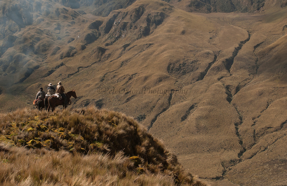 Chagras (cowboys) riding in Paramo (High altitude grasslands) to herd the cattle<br /> Chagras overnight in the Paramo in the furthest corners of the ranch to then drive the cattle towards the ranch the following day for the annual round-up.<br /> Yanahurco Hacienda (Ranch) - largest privately owned ranch in Ecuador (35,000 Hectares)<br /> Base of Cotopaxi Volcano<br /> Andes<br /> ECUADOR.  South America