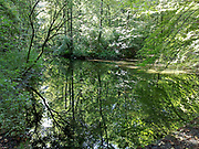 Lake in Forest Bavaria Germany