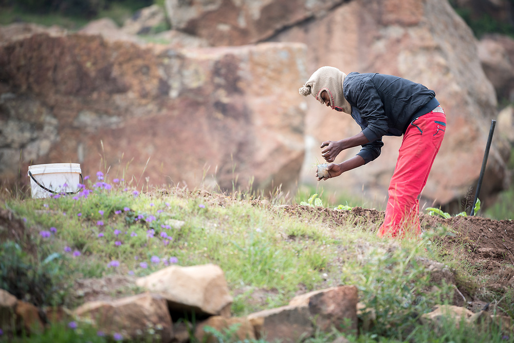 28 February 2017, Thaba Bosiu, Lesotho: Peace Akili farms a small plot of land in the village of Thaba Bosiu, Lesotho, where he lives with his wife and their four-year-old daughter Mpho. Thaba Bosiu is a sandstone plateau some 24 kilometers east of Lesotho's capital, Maseru. The name means Night Mountain, and surrounding the plateau is a small village and open plains. Thaba Bosiu was once the capital of Lesotho, and the mountain was the stronghold of the Basotho king when the kingdom of Lesotho was formed.