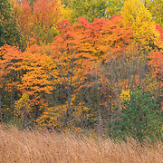 Autumn foliage and grasses captured from hiking trail at Gorman Nature Center.