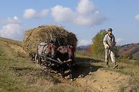 Farmers with traditional horse-drawn carriage loaded with hay, near Zarnesti, Transylvania, Southern Carpathians, Romania