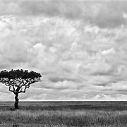 """ Serengeti""                                                    Tanzania<br />  The sheer vastness and beauty of the Serengeti will always hold a piece of my heart."