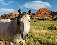 I found this white horse along the side of the road in Barnum, Wyoming, with a backdrop of red cliffs.