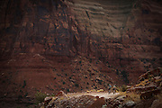 SHOT 10/17/16 11:07:28 AM - Mountain bikers climb the Shafer Trail section of the White Rim Trail. The White Rim is a mountain biking trip in Canyonlands National Park just outside of Moab, Utah. The White Rim Road is a 71.2-mile-long unpaved four-wheel drive road that traverses the top of the White Rim Sandstone formation below the Island in the Sky mesa of Canyonlands National Park in southern Utah in the United States. The road was constructed in the 1950s by the Atomic Energy Commission to provide access for individual prospectors intent on mining uranium deposits for use in nuclear weapons production during the Cold War. Four-wheel drive vehicles and mountain bikes are the most common modes of transport though horseback riding and hiking are also permitted.<br /> (Photo by Marc Piscotty / © 2016)