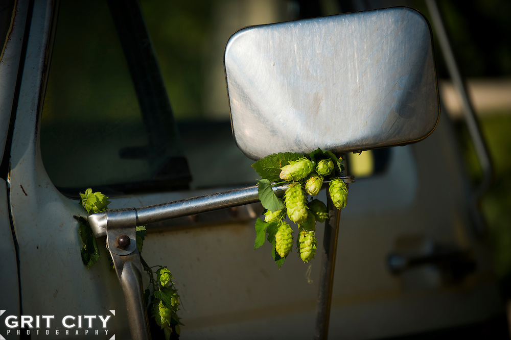 A look at the hop growing process in Washington and Oregon.