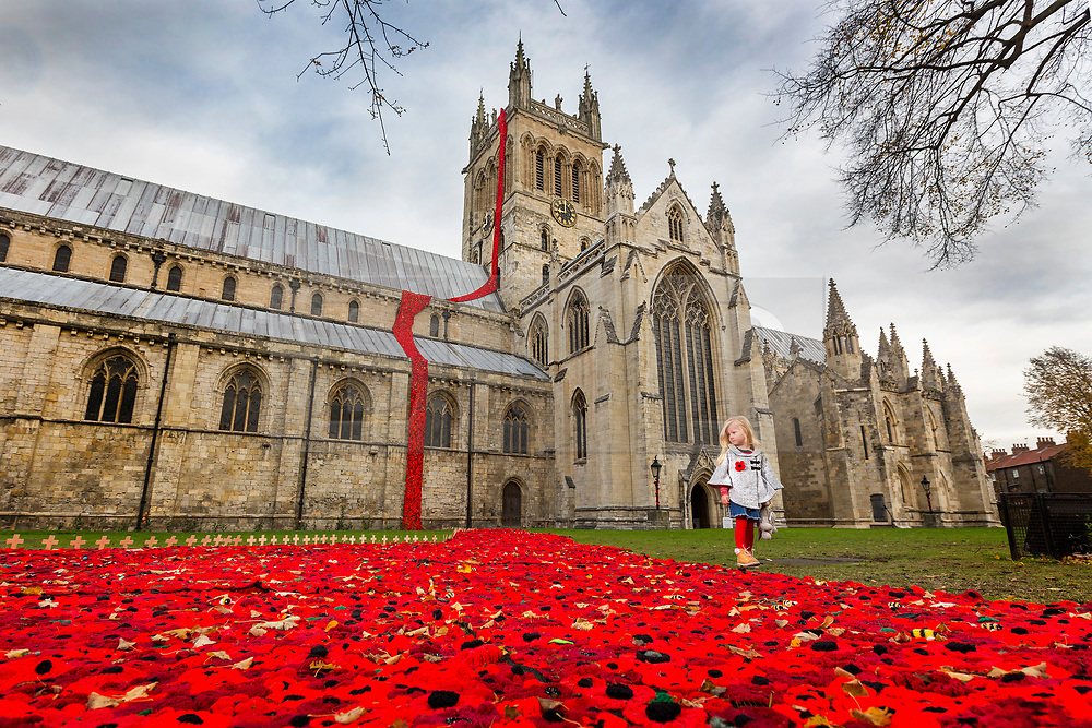 © Licensed to London News Pictures. 08/11/2018. Selby UK. 3 year old Scarlet walks past the thousands of hand knitted poppies that are flowing from the tower & in to the grounds of Selby Abbey in Yorkshire to mark the 100th Anniversary of the end of the First World War on the 11th of November. Photo credit: Andrew McCaren/LNP