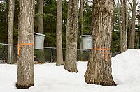 Maple Sugaring at Gilford Elementary School.     ©2019 Karen Bobotas Photographer