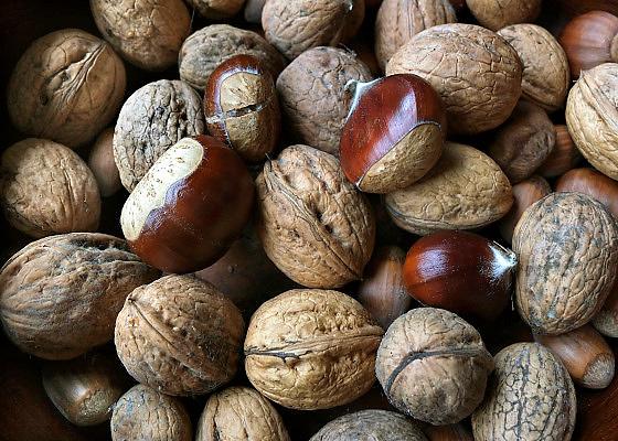 Nederland, Ubbergen, 1-11-2013Verschillende soorten noten.Foto: Flip Franssen/Hollandse Hoogte