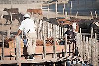 GAUCHOS TRABAJANDO EN UN FEED LOT, CARMEN DE ARECO, PROVINCIA DE BUENOS AIRES, ARGENTINA